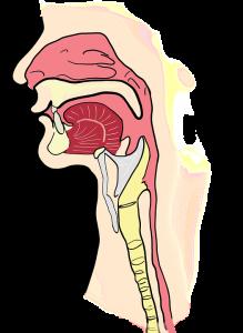 the-larynx-2381980_960_720